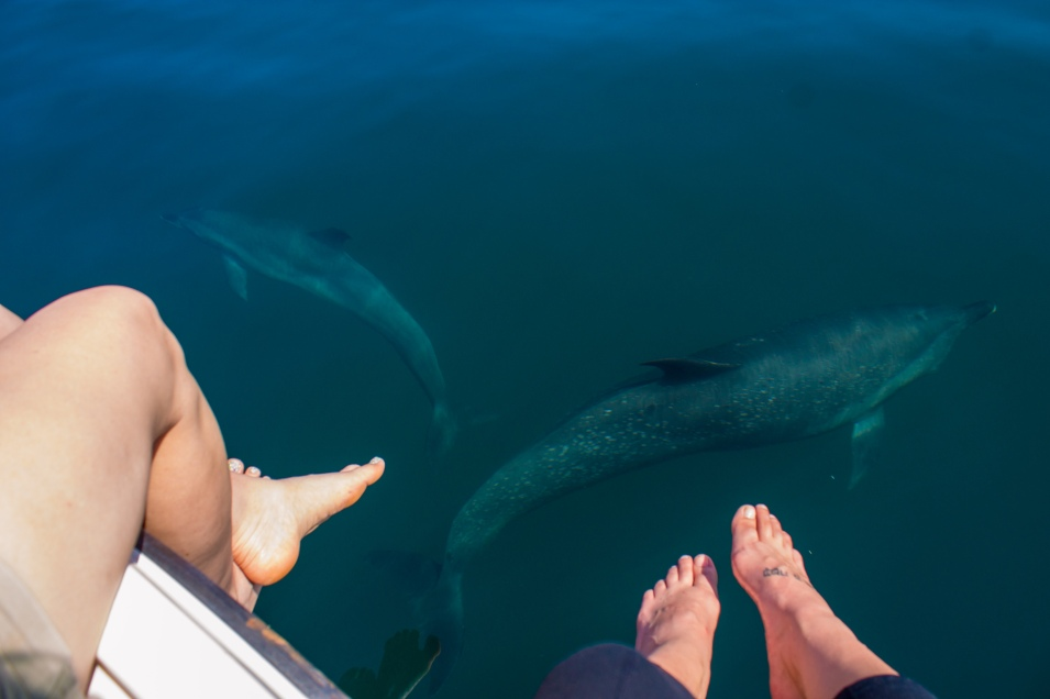 The dolphins I got to see in Costa Rica.